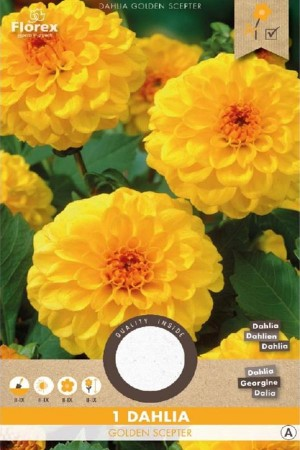 Dahlia Golden Scepter geel...