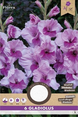 Gladiolus Alannah Lila -...