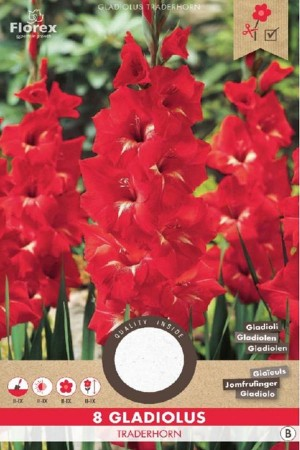 Gladiolus Traderhorn red -...