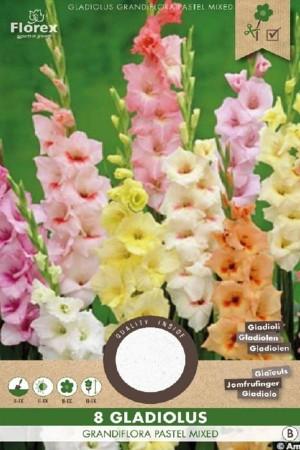 Gladiolus Pastel mixed -...