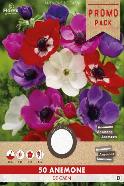 Anemone De Caen Mix 50 pieces - PROMO PACK