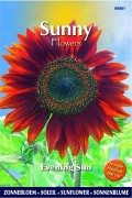 Sunflower (Helianthus) Evening Sun