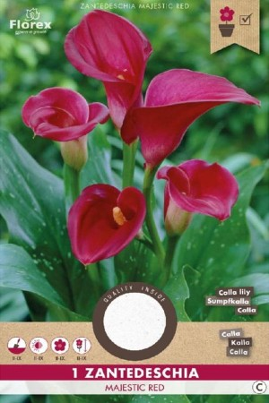 Calla Majestic Red...