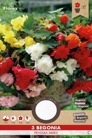 Hanging Begonia Pendula Mix...