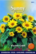 Pacino Gold Sunflower Helianthus seeds