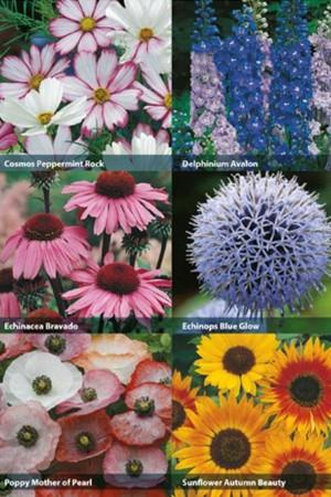 RHS Collectie 6x Bijenbloemen