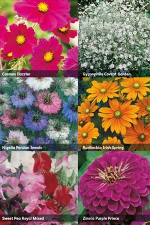 RHS Collectie 6x Snijbloemen