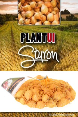 Sturon yellow onion sets 250g
