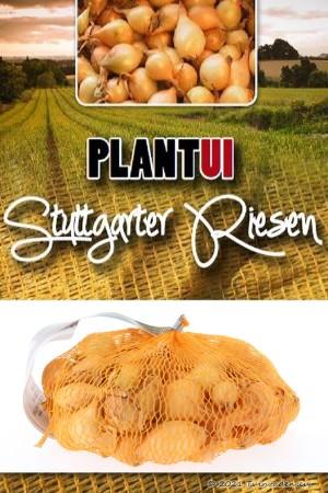 Stuttgarter Riesen gele...