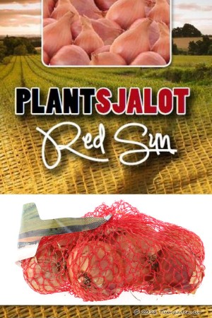 Red Sun rode plantsjalotten...