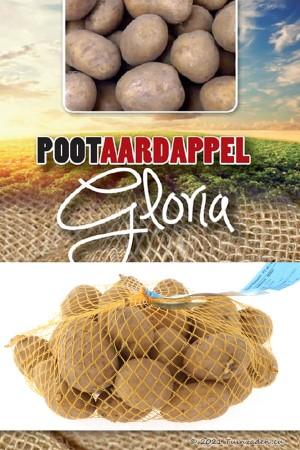 Gloria Early Seed Potatoes 1Kg
