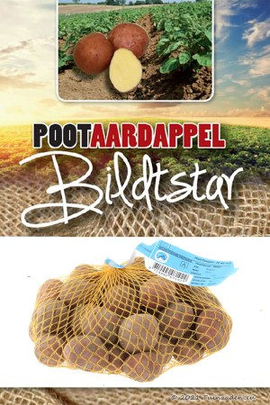 Bildtstar Late Seed...