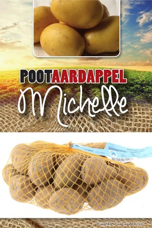 Michelle Late Seed Potatoes...