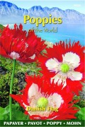 Poppy (Papaver) Danish Flag