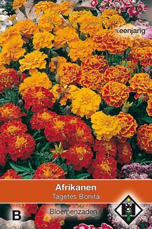 Bonita African Marigold -...