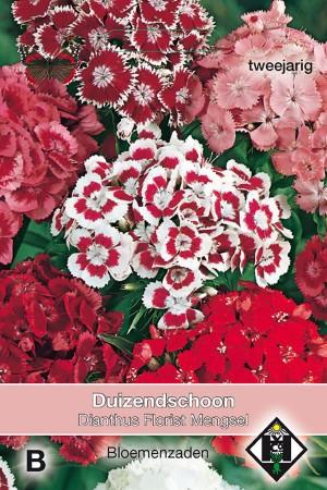 Florist Dianthus - Sweet...
