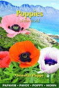Poppy (Papaver) Oriental Poppy