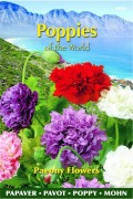 Poppy (Papaver) Paeony Flowers