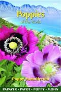 Poppy (Papaver) Somniferum