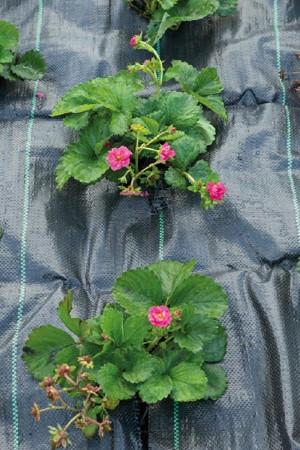 Weed control fabric 2x5m -...