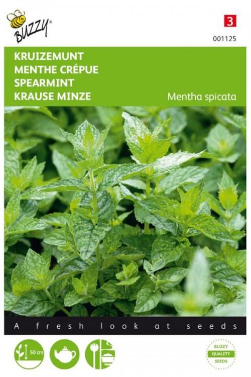 Kruizemunt - Groene Munt zaden