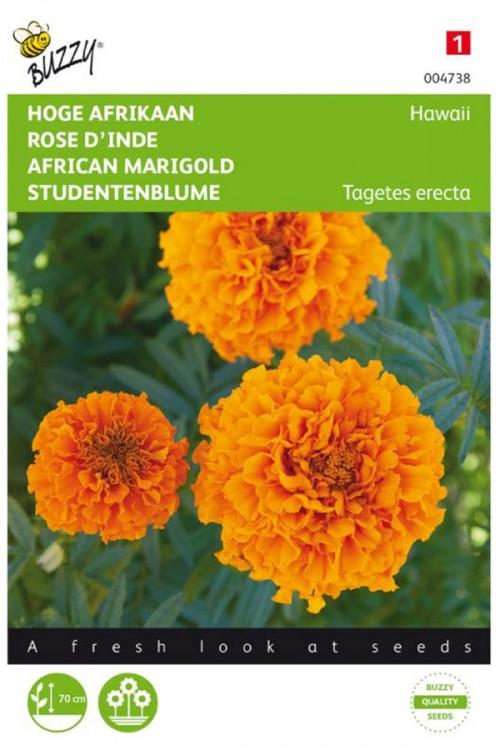 Hawaii African Marigold Tagetes seeds