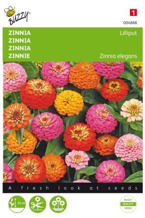 Lilliput Pompon Zinnia seeds