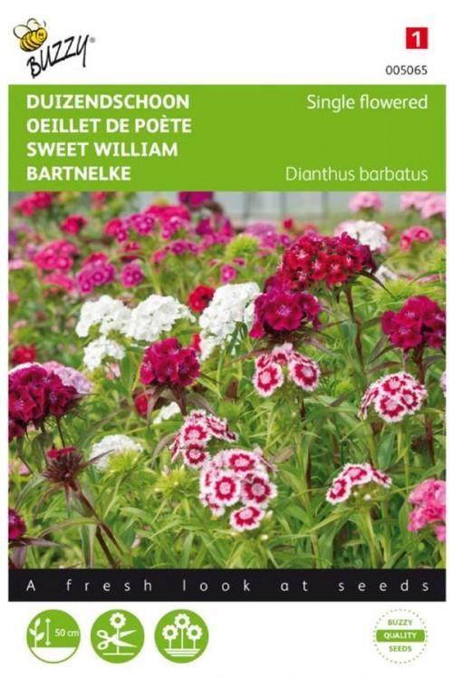 Single flowered - Sweet William seeds