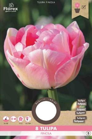 Tulpen Finola - Roze...