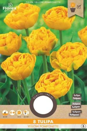 Tulips Yellow Pomponette-...