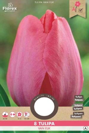 Tulips Van Eijk - Red Tulip...