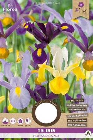 Iris Hollandica Mix gemengd