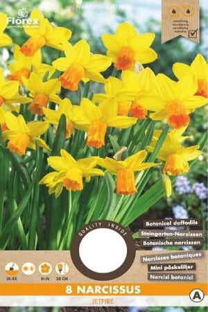 Narcis Botanisch Jetfire -...