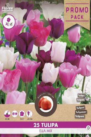 Tulips Ella -...