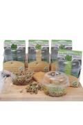 Organic sprouting seeds Linzen