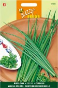 Welsh Onion white - Chive seeds