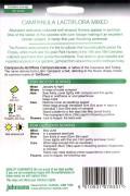 Lactiflora Campanula seeds