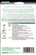 Headbourne Hybrids Agapanthus seeds