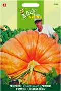Atlantic Giant pumpkin seeds