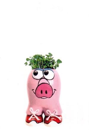 Munakuppi Munakuppi Pig