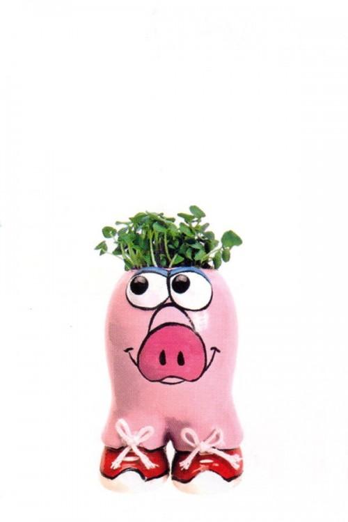 Munakuppi Pig
