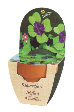 Mini Growing Kit XL 4 leaf clover