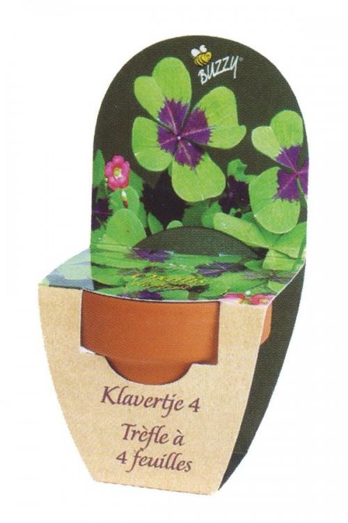4 leaf clover - Grow Kit XL