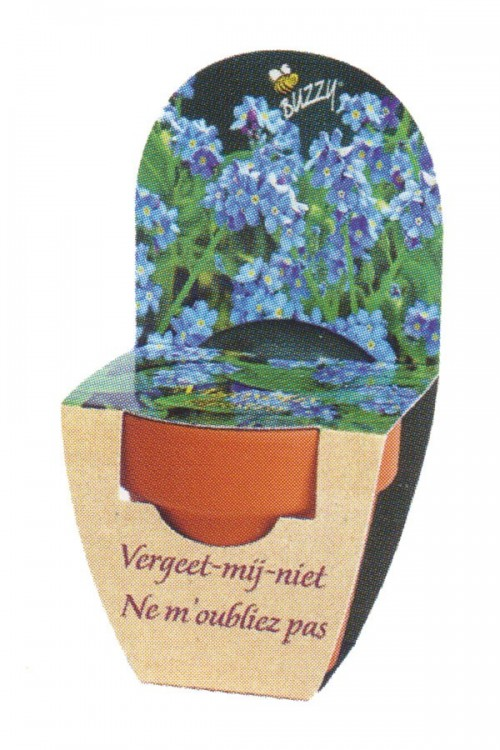 Forget-me-not - Grow Kit XL