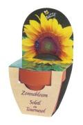 Zonnebloem - Groeikadootje XL