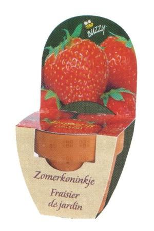 Groeikadootje XL Aardbeien