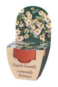 Groeikadootje XL Engelse Kamille