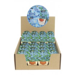 Mini Growing Kit XL Forget-me-not