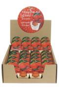 Mini Growing Kit XL Strawberries