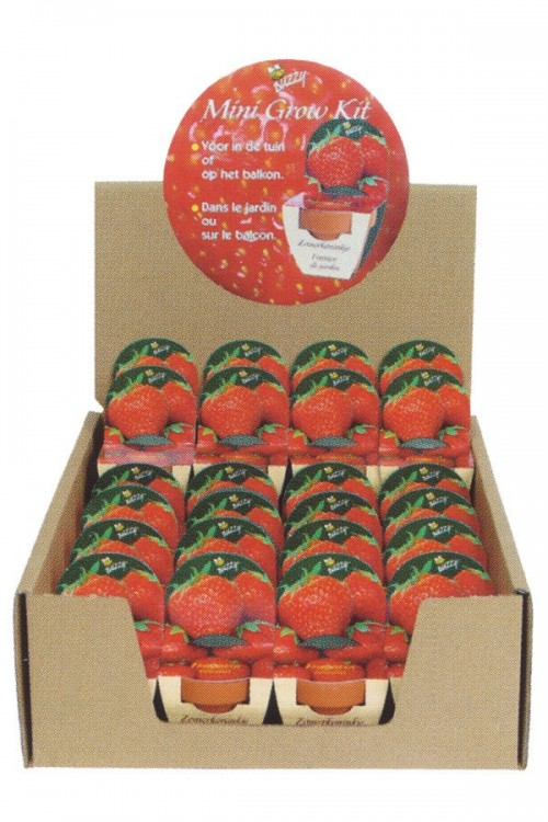 Strawberry - display Grow Kit XL